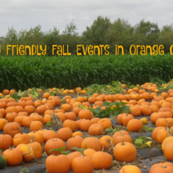 Family Friendly Fall Events in Orange County