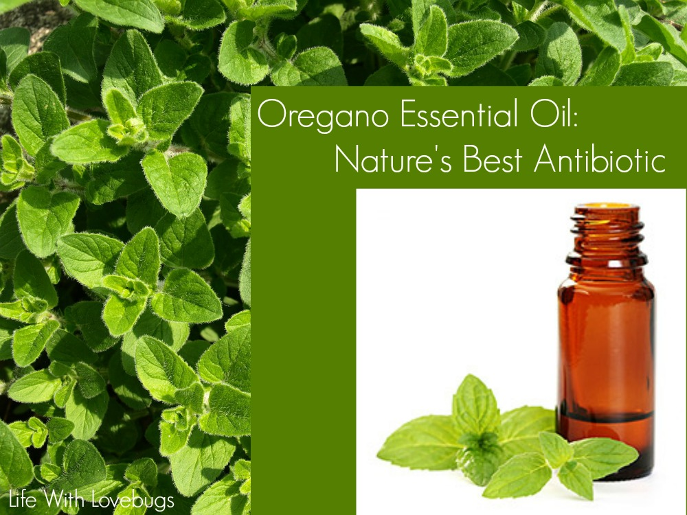 Oregano Essential Oil With Best Picture Collections